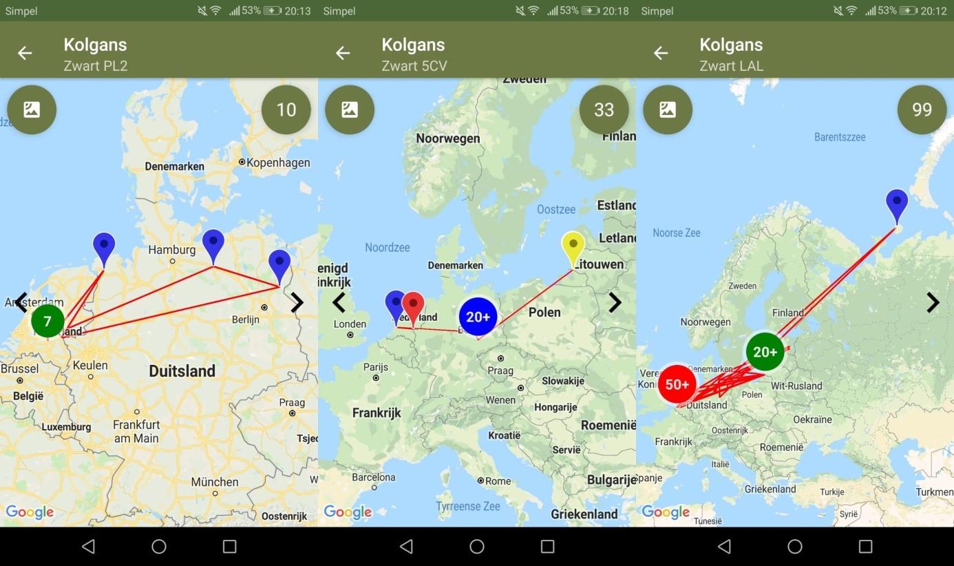 Routes/meldingen van de geringde kolganzen (Menno den Uijl)
